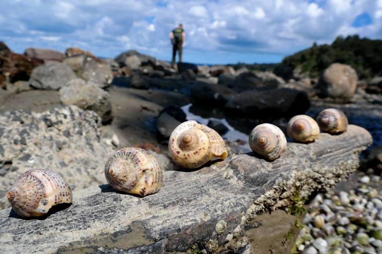 Muscheln bei Armour Bay