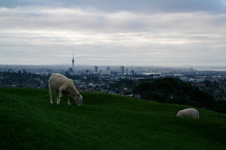 Aussicht vom One Tree Hill auf Downtown Auckland mit Schaf
