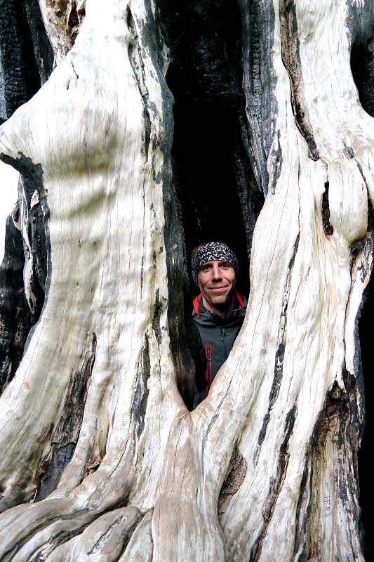 Jonas in einem Baum im Cornwall Park AucklandJonas in einem Baum im Cornwall Park Auckland