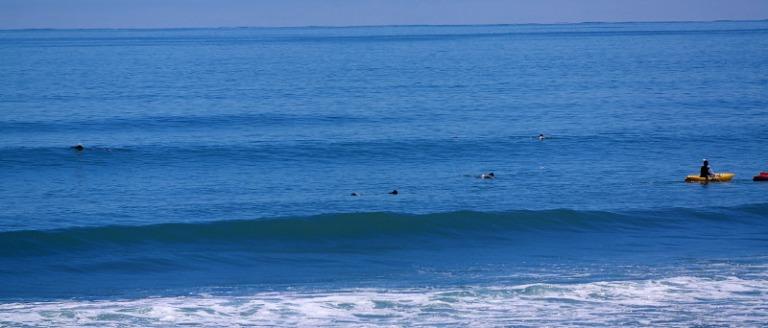 hector-delfine_schwimmen_01