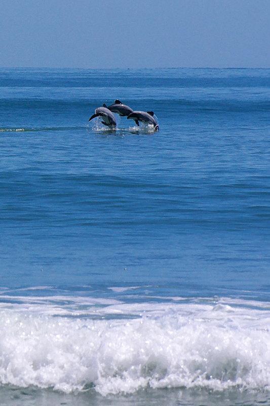 hector-delfine_schwimmen_03