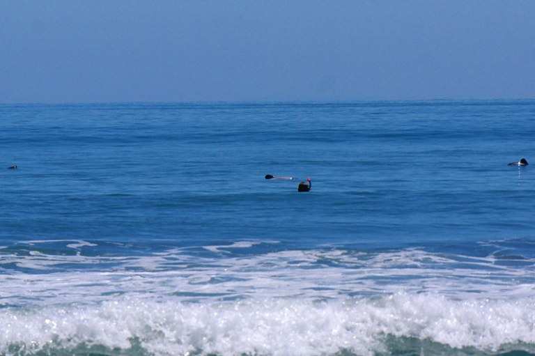 hector-delfine_schwimmen_04