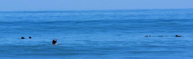 hector-delfine_schwimmen_05