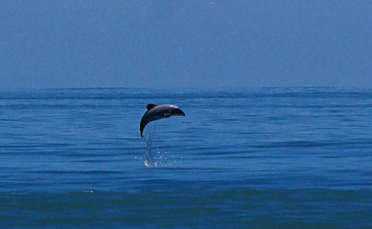 hector-delfine_schwimmen_07
