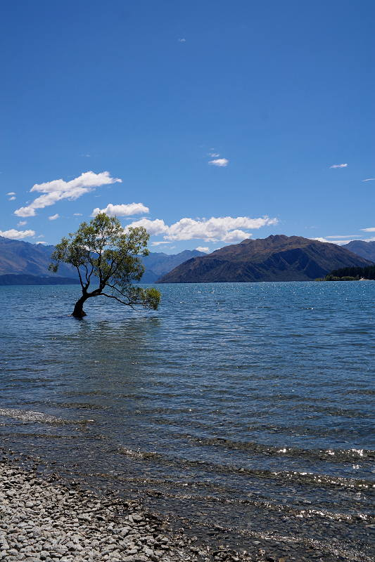 that_wanaka_tree_01