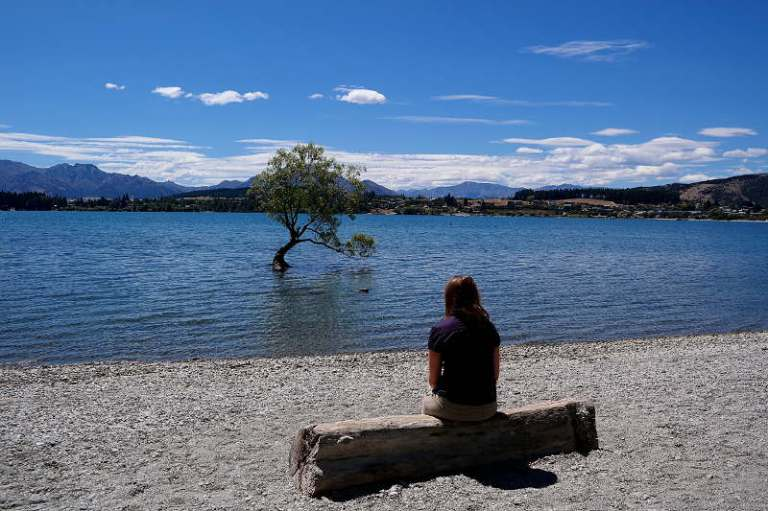 that_wanaka_tree_02