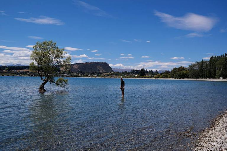 that_wanaka_tree_03