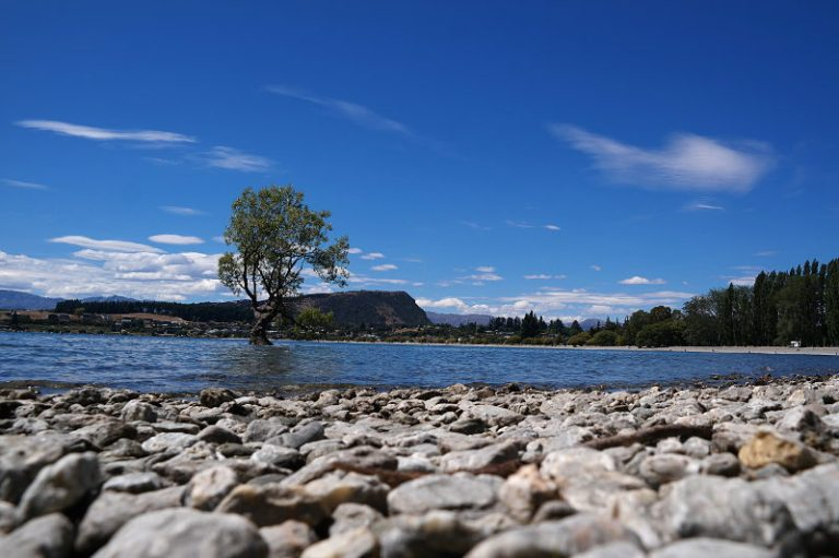 that_wanaka_tree_04