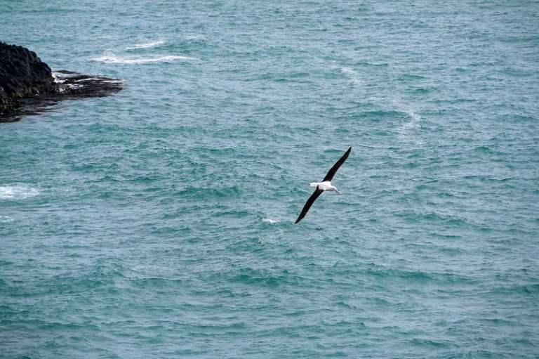 albatrosse_02