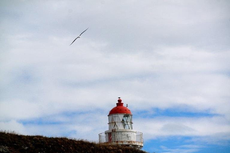 albatrosse_03
