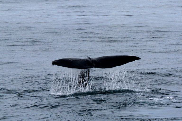 whale_tale
