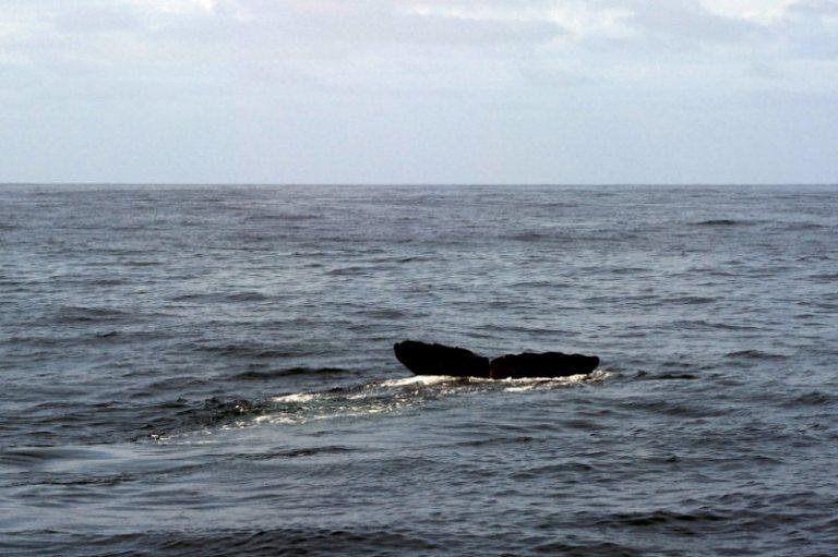 whalewatching_kaikoura_03