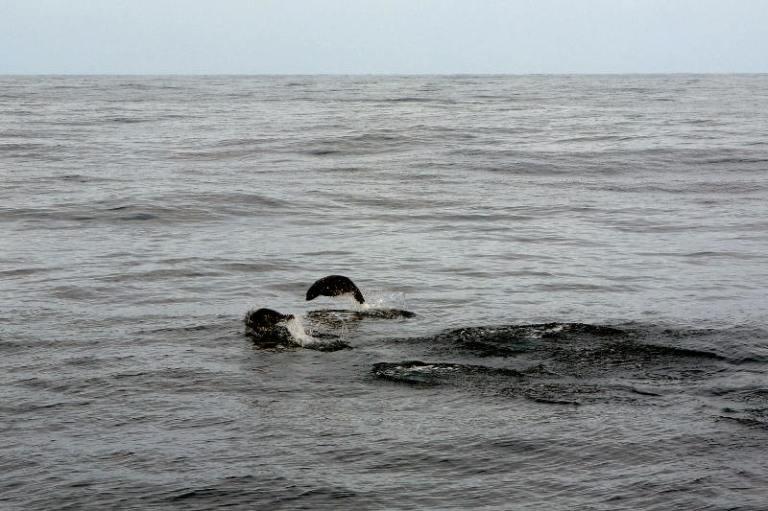 whalewatching_kaikoura_04