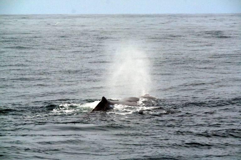 whalewatching_kaikoura_05