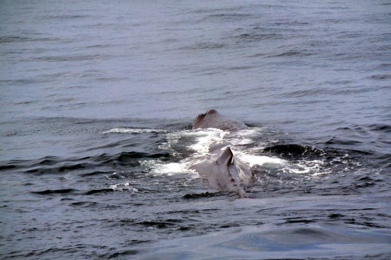 whalewatching_kaikoura_06