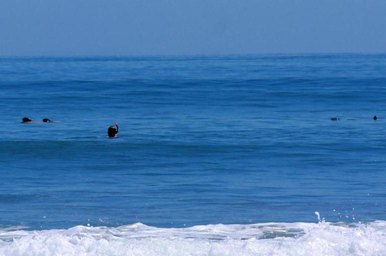 Jonas schwimmt mit Hector-Delfinen