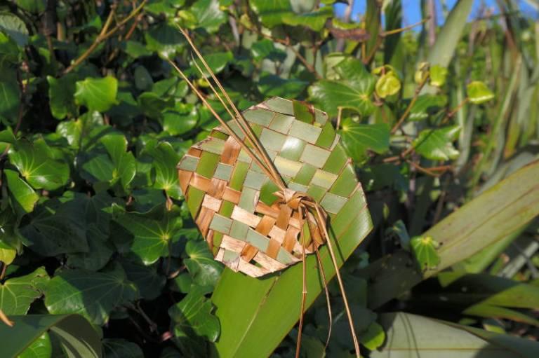Neuseeländische Flachs-Blume