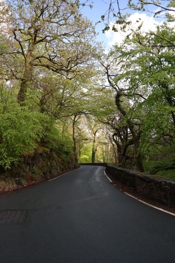 Eine Straße wie durch einen Märchenwald