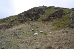 Schafe im Snowdonia Nationalpark in Wales