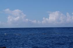 Pottwale auf den Azoren