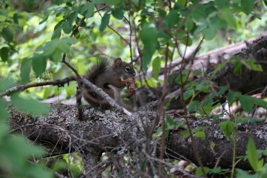 Eichhörnchen im Kentucky Alleyne Provincial Park