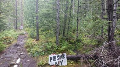 Wie sieht Poison Ivy aus?
