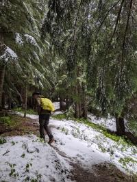 Loop Brook Trail: Ist da ein Bär?