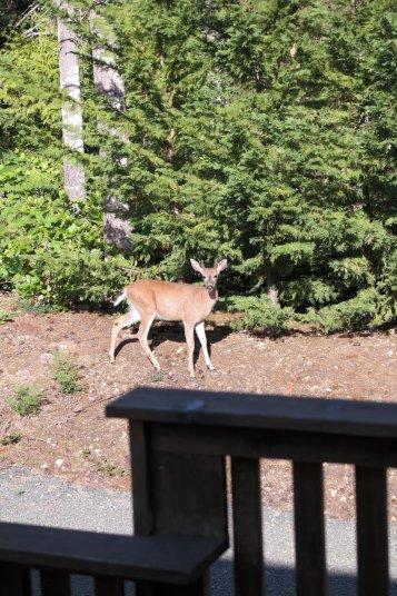 Tierischer Besucher im Garten