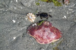 Tag am Strand auf Vancouver Island