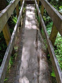 Rainforest Trail Pacific Rim National Park