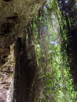 Umpherston Sinkhole (Cenote)
