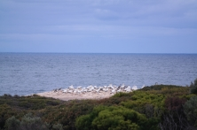 Point Danger Reserve