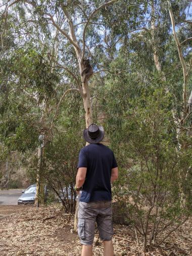 Jonas und der Koala